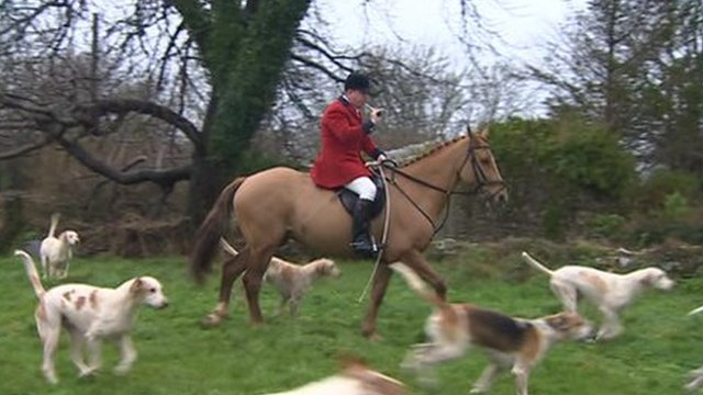 Huntsman with hounds