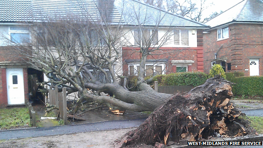 The tree came down in Kings Road, Kingstanding, around 10:00 GMT.