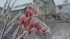 Red and orange leaves on a plant are frozen in ice. Snow on the rooftops of houses behind.