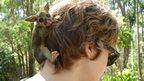 Baby possum in a woman's hair. Photo: Frank Sainsbury
