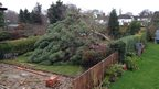 A large tree has fallen across a garden.