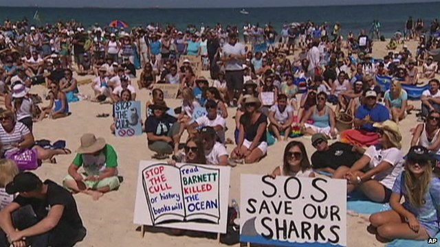 Australians protest against shark 'cull'