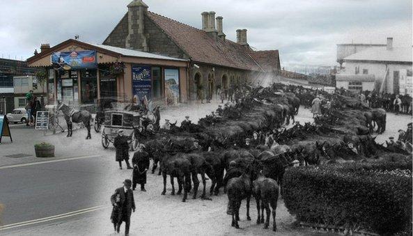 Mules at Minehead station