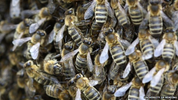 EU bee shortage threatens crops