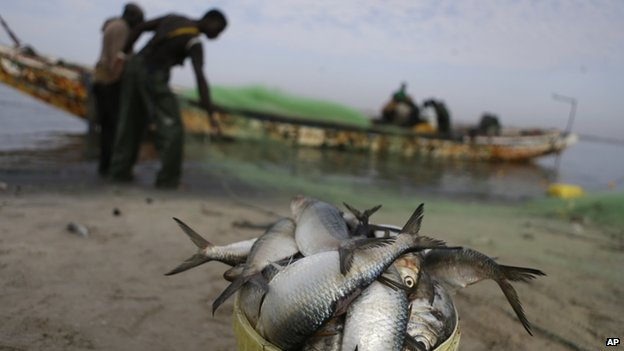 Fishermen reload their nets after emptying their day's catch in Saint-Louis, Senegal - 17 May 2013