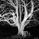 Tree lit by flash