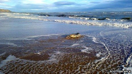 Seal returns to sea