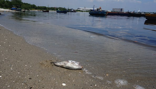 A dead fish in Rio's Fundao Island
