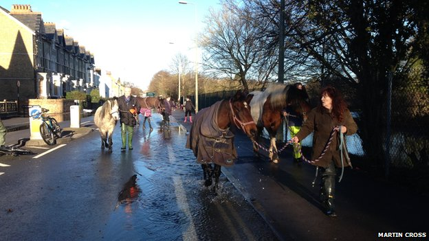 Horses on Abingdon Road