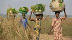 Women carry basins of vegetables on their heads to sell near Bangui, CAR - Tuesday 7 January 2014