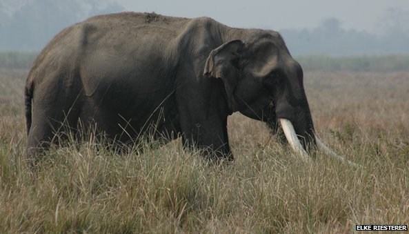 Joyraj in Kaziranga national park