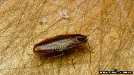 File photo of a cockroach (2006)