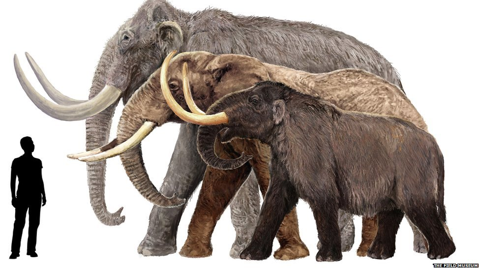 In pictures: Mammoths of the ice - 110.7KB