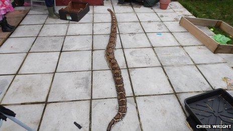 A snake found in Erddig, Wrexham