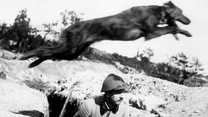Dog jumping over trench