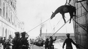 Cavalry horses lowered onto land in sling from ship
