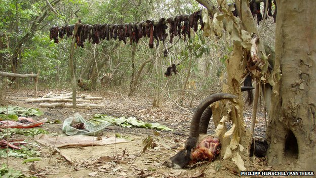 Poached antelope in Ivory Coast