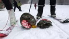 A pet rabbit and a pet tortoise competing in a skiing competition held for pets and their owners in Sanmenxia, north China's Henan province