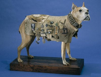 Sergeant Stubby with jacket on display