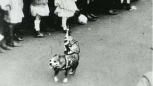 Stubby leading parade
