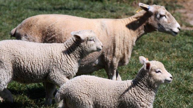 Welsh single farm payment