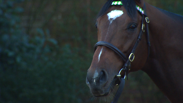 Champion racehorse Frankel