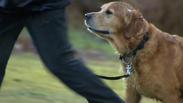 Dog being walked