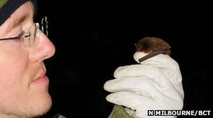 Daniel Hargreaves holds the Nathusius' pipistrelle