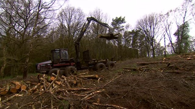 Tree clearance