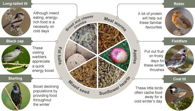 Food preferred by UK winter garden birds