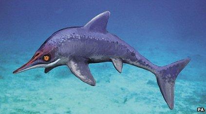 An artist's impression of an ichthyosaur