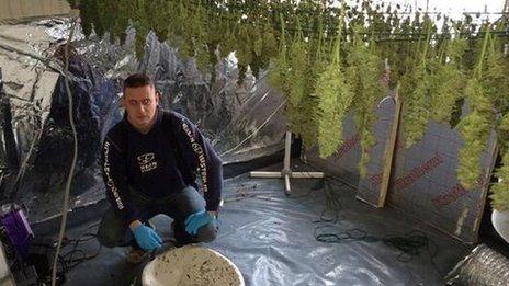 Corby cannabis raid
