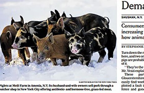 The original picture, with pigs' faces revealed