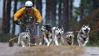 Siberian Husky Club race at Aviemore