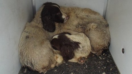 Donegal Pet Rescue Dogs