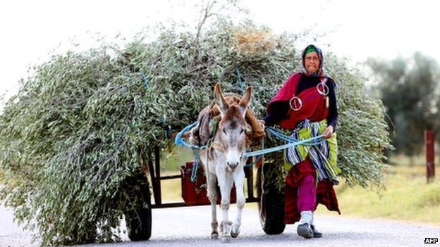 A woman carries olive branches with her donkey on 17 December 2013 in Hergla, Tunisia.