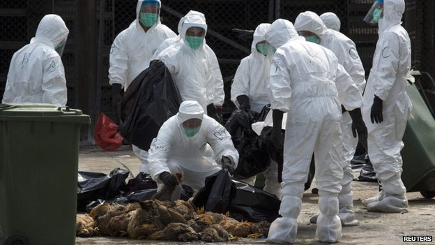 Health workers pack dead chickens in trash bags at a wholesale poultry market in Hong Kong, 28 January 2014