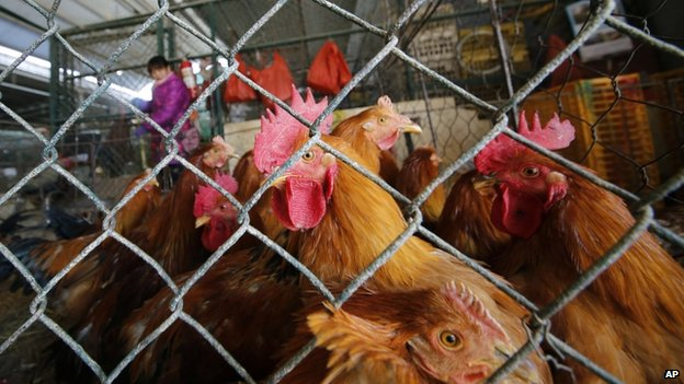 File image of live chickens in a cage at a wholesale poultry market in Shanghai on 21 January 2014