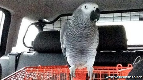 Parrot found by police