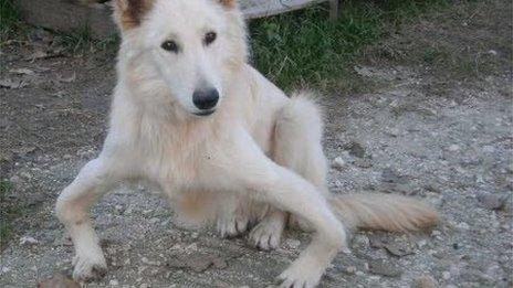 Corfu Dog Rescue