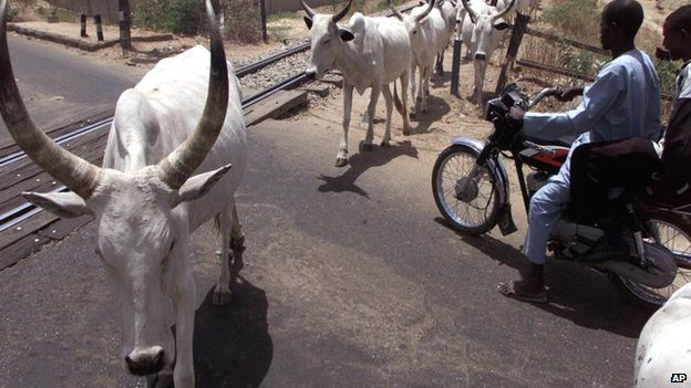 People on a motorbike wait for cattle to cross the road in Nigeria