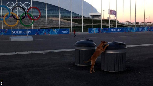 Dogs in the Olympic Park