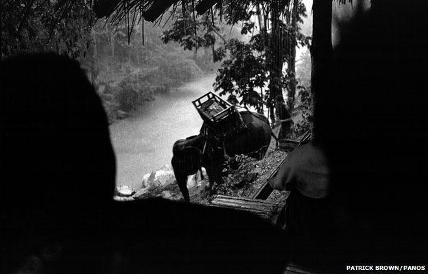 Elephants, employed in illegal logging operations along the river on the Thai-Burmese border, return to camp in the rain.