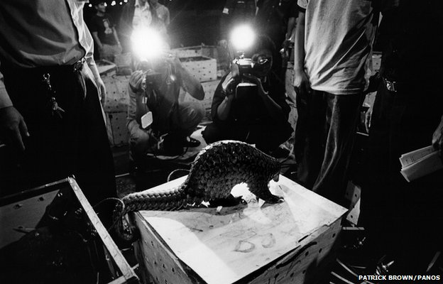 Journalists photograph a shipment of pangolins