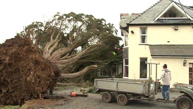 Tree on Cadwgan Hotel in Dyffryn Ardudwy