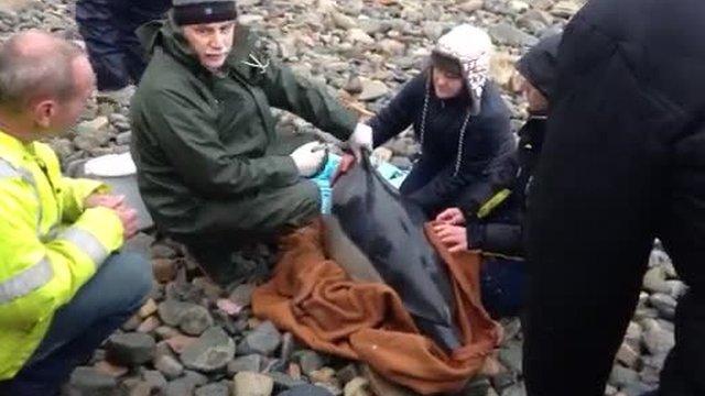 Vet John Knight tends to the dolphin