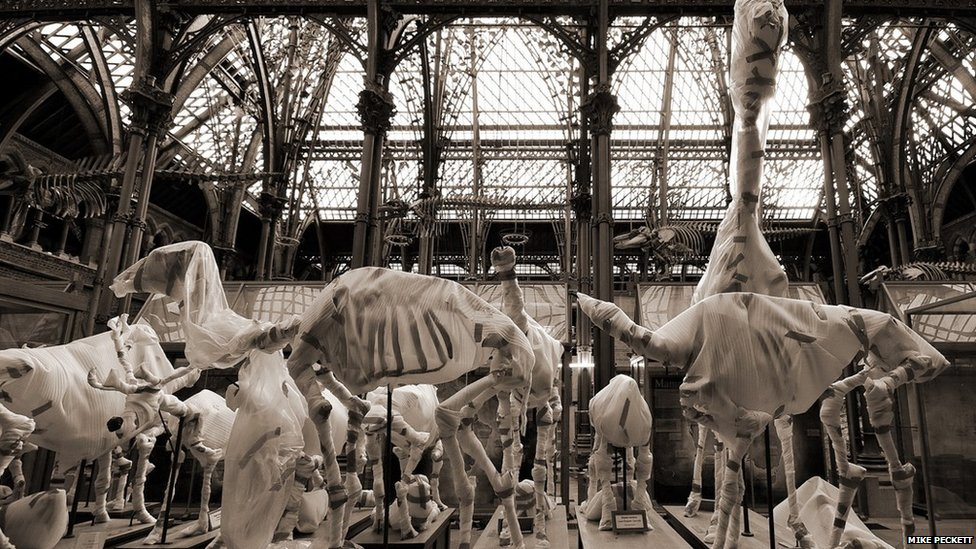 Dinosaur exhibits covered in museum