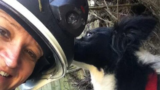 The four-year-old border collie Cayyad is rescued from the rubble in Clacton