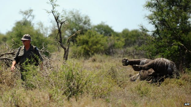 Rhino killed by poachers
