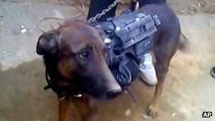 Colonel, SAS dog captured by the Taliban